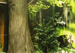 樹木、緑地造作